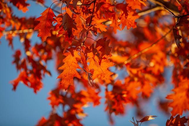東山動植物園紅葉2018見頃はいつからいつまで?ライトアップ時間は?